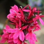 When To Plant Annuals In Scotland? 3 Bonus Tips!