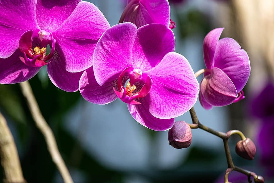 how to get multiple stems on an orchid