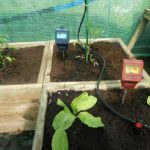 How to Use Household Items for Self-Watering Mini Polytunnel? 3 Special Tips!