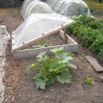 What Can You Plant in a Mini Polytunnel? 6 Amazing Plants!