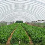 How To Keep Plants In Polytunnel From Growing Mould? 3 Bonus Tips!