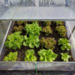 How to Cool a Small Polytunnel? 3 Special Ways!