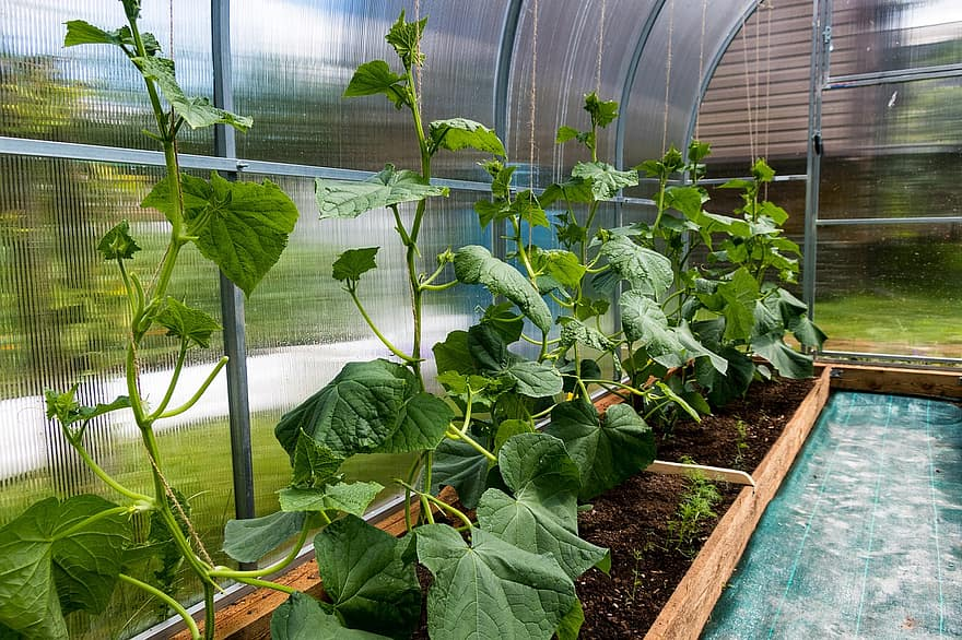 How To Keep Your Hobby Greenhouse From Overheating