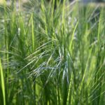When To Plant Decorative Grasses? The Seasons Explainer!