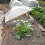 How to Make a Small Polytunnel for Seedlings