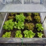 How Warm Do Plants Stay in a Small Pop-Up Polytunnel? Example Download!