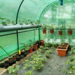 How To Keep Small Hobby Polytunnel Warm? 5 Free Ways!