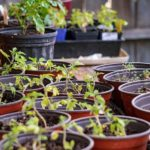 How to Place Your Plants in a Small Polytunnel? 3 Plants Explainer!