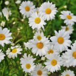 Best Flowers To Grow In Scotland For Beginners!