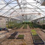 What Colour Light Do Plants Grow Best In A Polytunnel? The Clue!