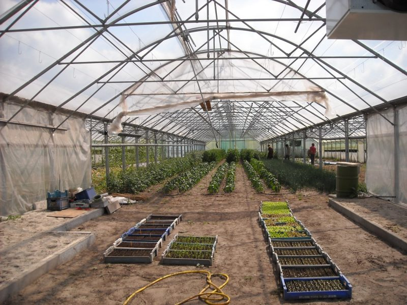 What Color Light Would Be The Best For Growing Plants In A GreenhouseWhat Color Light Would Be The Best For Growing Plants In A Greenhouse