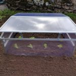 What Temperature Should I Keep Vegetable Plants In Polytunnel? Differences Explained!