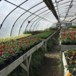 How To Use a Greenhouse Effectively in the UK? 3 Special Considerations!