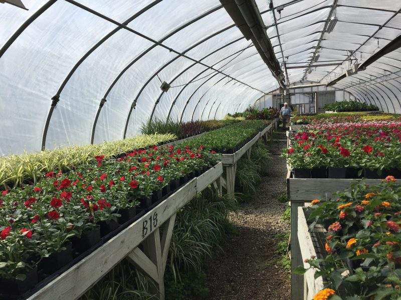 How To Use Greenhouse In Georgia For Success