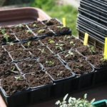 How To Start Seeds In A Small Greenhouse? 4 Free Steps!