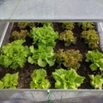 What Are Good Things To Grow In A Small Polytunnel? 4 Seasons Explained!