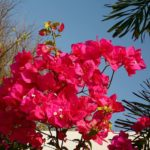 When Do Crepe Myrtles Bloom In Kent? 3 Efficient Giveaways!