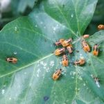 How To Use Green Cleaner For Spider Mites? 4 Exclusive Ways!