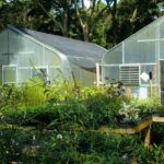 How to Heat a Greenhouse for Free? 3 Bonus Tips!