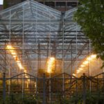 When To Use A Growing Light In A Polytunnel? 2 Free Tips!