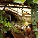 How To Shade A Polytunnel? 3 Easy Ways!