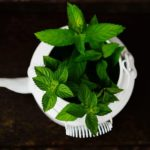 5 Tips How To Grow Herbs In A Mini Polytunnel In The UK?