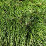 When Do Ornamental Grasses Start Growing? 2 Bonus Seasoned!