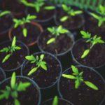 When to Put Seedlings Under Light? 3 Bonus Tips!