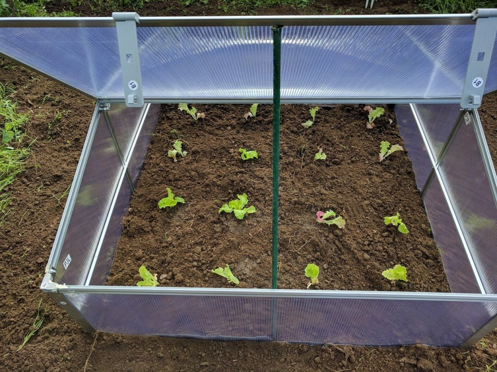 How To Use Grow Light In A Small Greenhouse