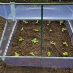 How To Use A Grow Light In A Small Polytunnel? More Discovered!