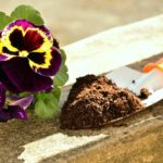 How Long To Grow Pansies From Seed? 3 Exclusive Advice!
