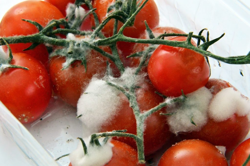 When Do Tomatoes Go Bad? 4 Signs to Watch Out For
