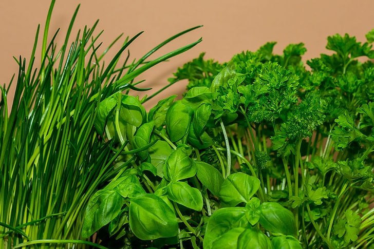 How To Pick Herbs Without Killing Plant