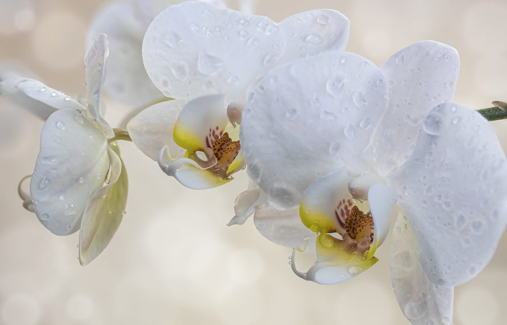 How To Grow Orchids In Water In 3 Easy Steps