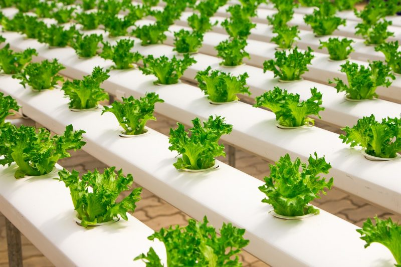 How Do You Aerate Hydroponics. The Best 5 Ways