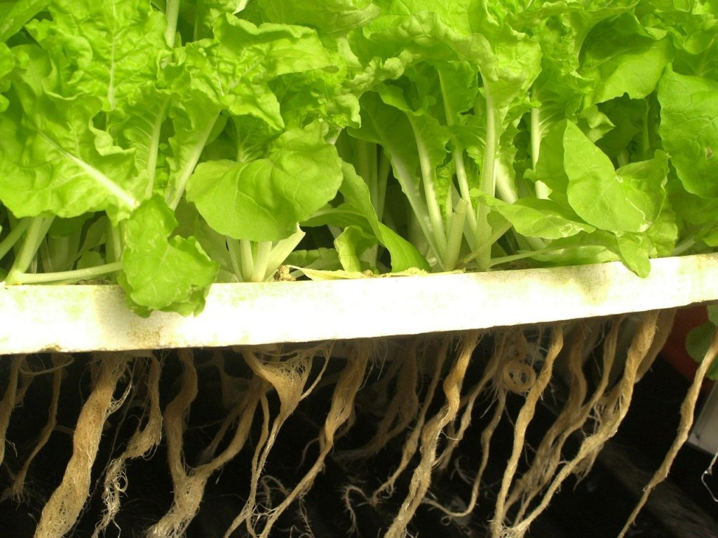 How Often Should You Change the Water in Your Hydroponic System