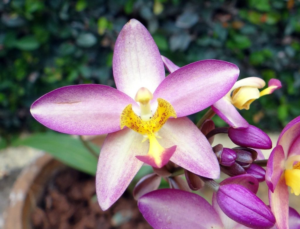 How To Plant Ground Orchids. 2 Easy Steps