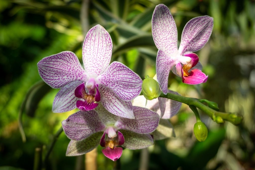How To Get Rid Of Scale On Orchids Successfully