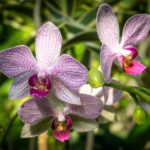 How To Get Rid Of Scale Insects On Orchids? 4 Proved Options!