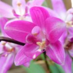 How To Grow Ground Orchids? 2 Effective Steps!