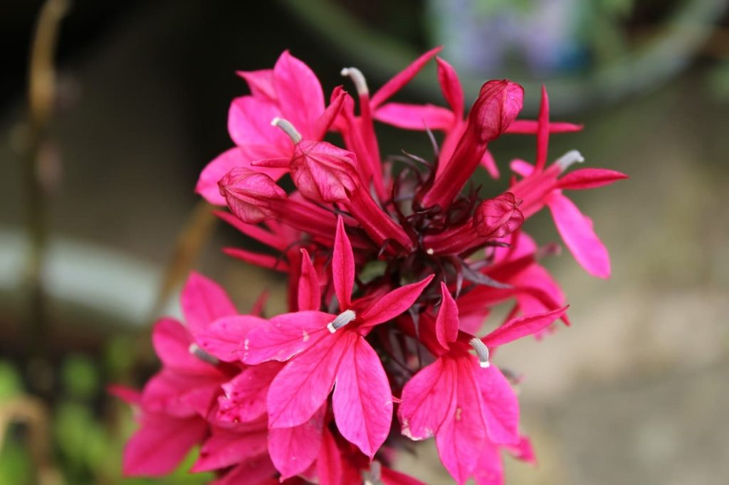 How To Keep Annuals Alive Through Winter