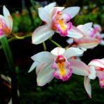 How To Divide Orchids? 4 Free Steps!
