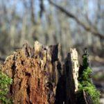 How to Prevent Root Rot? 4 Bonus Tips!