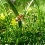 How Is Grass Pollinated? The Clue!