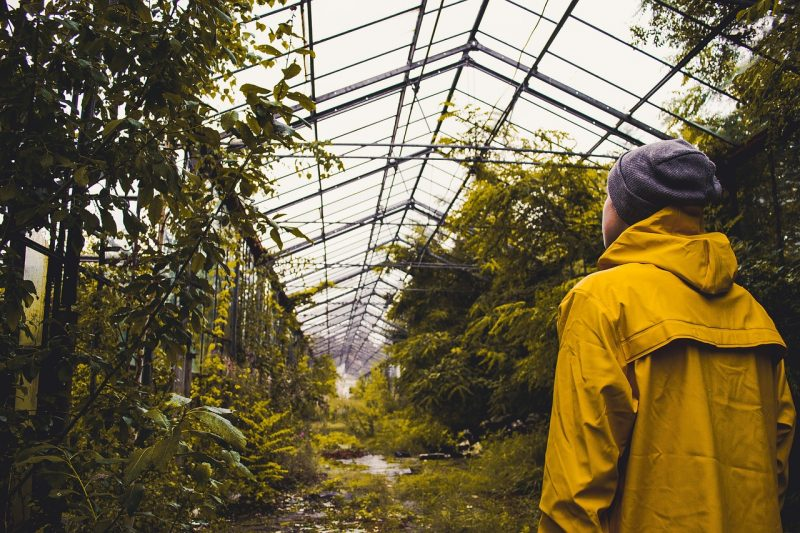 How To Diffuse Light In The Greenhouse