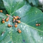 How To Treat Spider Mites During Flowering