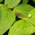 How to Get Rid of Thrips in the House? 5 Essential Tips!