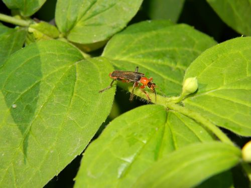 How to Get Rid of Thrips in the House: 5 Must-Have Tips