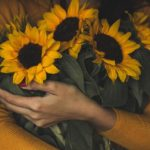 How To Care For Cut Sunflowers? 10 Efficient Steps!