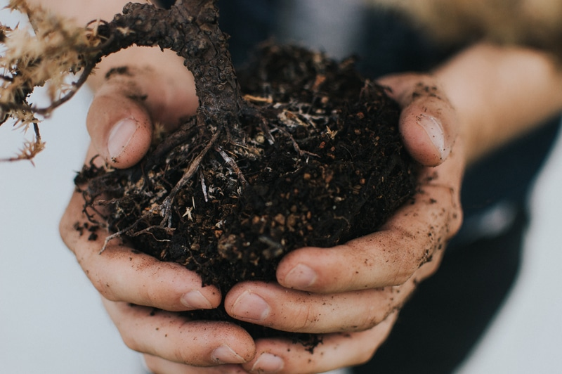 How To Add Iron To Soil Beginner's Guide
